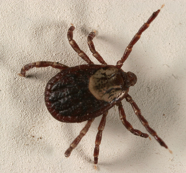 tick control in Anchorage